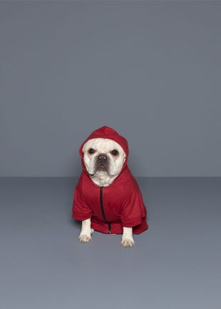 CPS Dog Hoodie